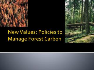 New Values: Policies to Manage Forest Carbon