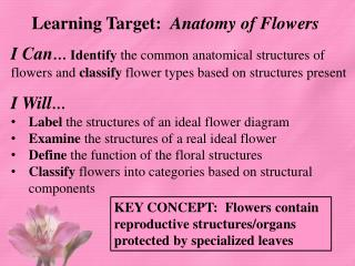 Learning Target:   Anatomy of Flowers