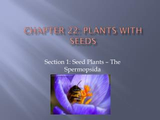 Chapter 22: Plants with Seeds