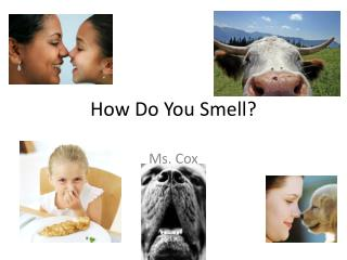 How Do You Smell?