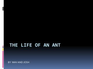 THE LIFE OF AN ANT