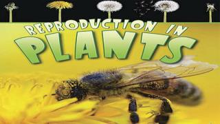Reproduction In Plants