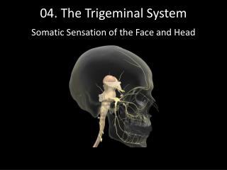 04. The Trigeminal System