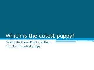 Which is the cutest puppy?