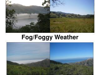 Fog/Foggy Weather