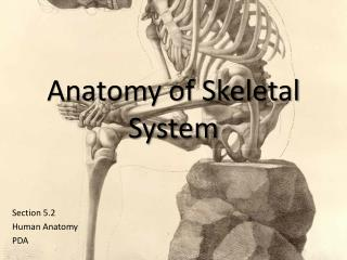 Anatomy of Skeletal System