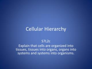 Cellular Hierarchy