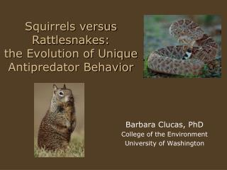 Squirrels versus Rattlesnakes:  the Evolution of Unique Antipredator Behavior