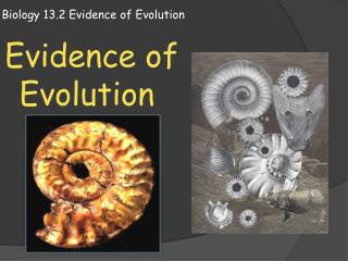 Biology 13.2 Evidence of Evolution