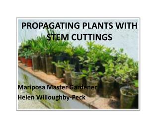 PROPAGATING PLANTS WITH STEM CUTTINGS