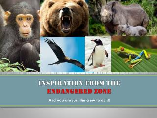 Inspiration from the  endangered zone