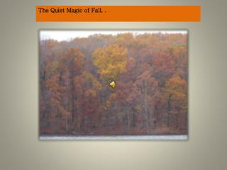 The Quiet Magic of Fall