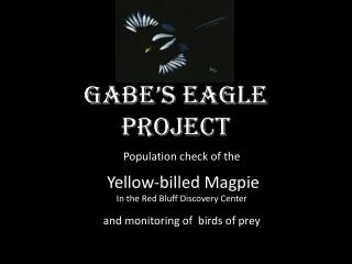 Gabe's Eagle project