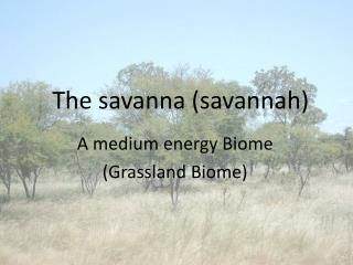 The savanna (savannah)