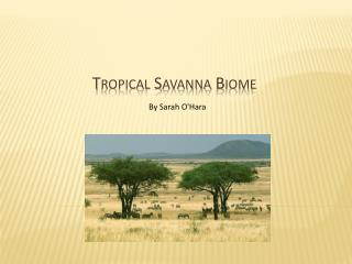 Tropical Savanna Biome