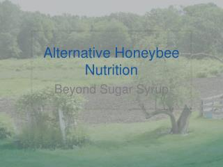Alternative Honeybee Nutrition