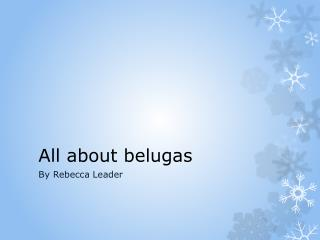 All  about belugas
