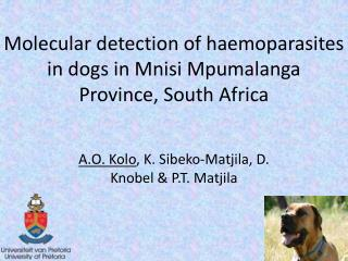 Molecular detection of haemoparasites in dogs in Mnisi Mpumalanga  Province, South Africa