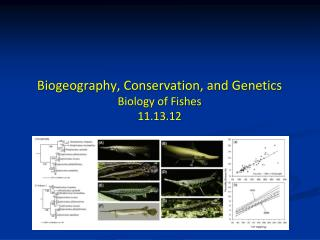Biogeography, Conservation, and Genetics Biology of Fishes 11.13.12