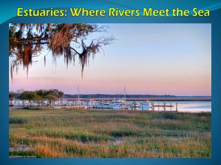 Estuaries: Where Rivers Meet the Sea