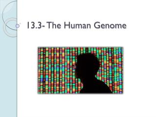 13.3- The Human Genome