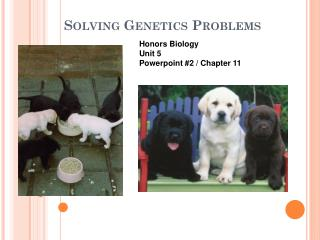 Solving Genetics Problems