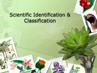 Scientific Identification & Classification