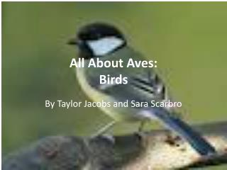 All About Aves: Birds