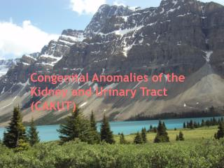 Congenital Anomalies of the Kidney and Urinary Tract (CAKUT)
