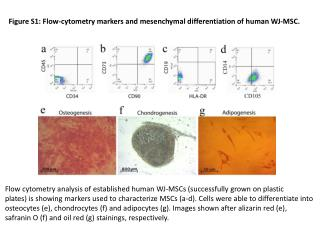 Figure S1: Flow - cytometry  markers and  mesenchymal  differentiation of human WJ-MSC.