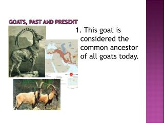 Goats, Past and Present