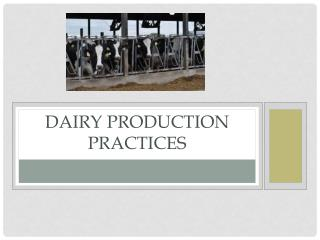 Dairy Production Practices