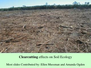 Clearcutting  effects on Soil Ecology Most slides Contributed by: Ellen Mussman and Amanda Ogden