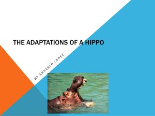 The Adaptations of a Hippo