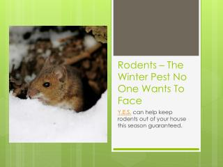 Rodents - The Winter Pest No One Wants To Face