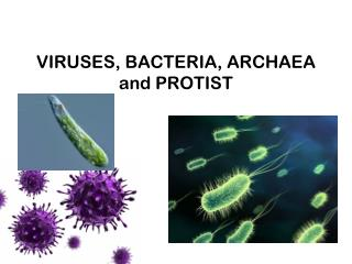 VIRUSES, BACTERIA, ARCHAEA and PROTIST