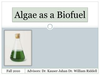 Algae as a  Biofuel