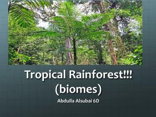 Tropical Rainforest!!! (biomes)