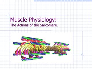 Muscle Physiology: The Actions of the Sarcomere.
