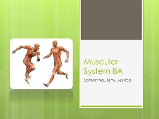 Muscular System 8A