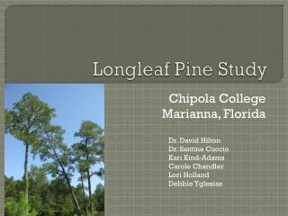 Longleaf Pine Study