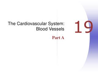 The Cardiovascular System: Blood Vessels Part A