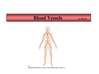 Blood Vessels              D. Matesic