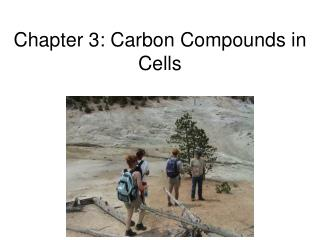 Chapter 3: Carbon Compounds in Cells