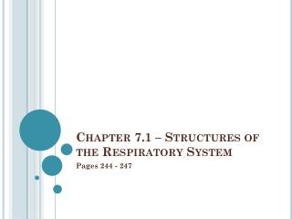 Chapter 7.1 – Structures of the Respiratory System