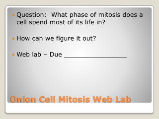 Onion Cell Mitosis Web Lab