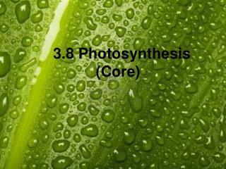 3.8 Photosynthesis (Core)