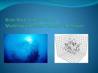 Birds flock, fishes school: Modeling Emergent Collective Behavior