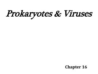 Prokaryotes & Viruses