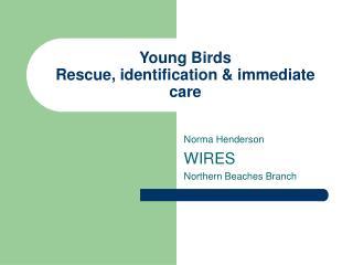 Young Birds Rescue, identification & immediate care